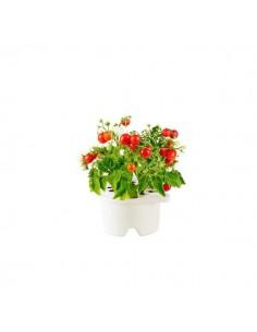 Click & Grow Refill Mini Pomodoro